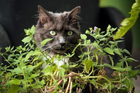 고양이에게 독이 되는 식물들
