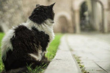 이스탄불은 고양이의 도시
