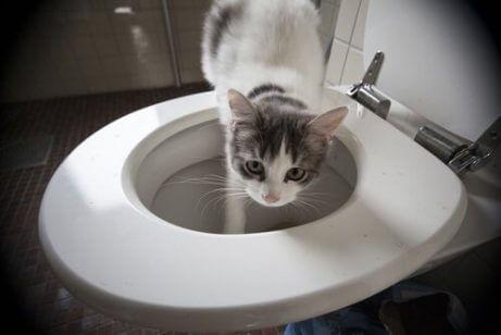 고양이의 이상한 행동들