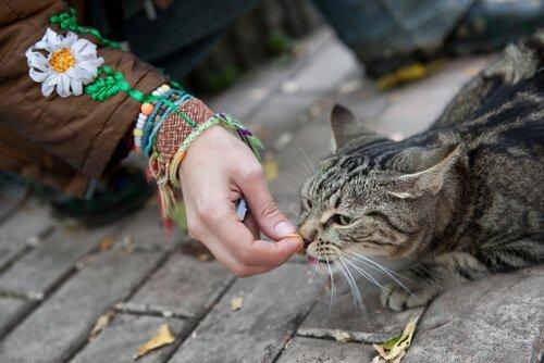 길고양이의 신뢰를 얻는 방법