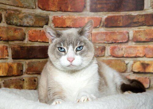 고양이의 노령묘 치매