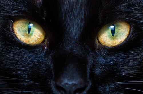 고양이와 개의 동공은 어떻게 기능할까?
