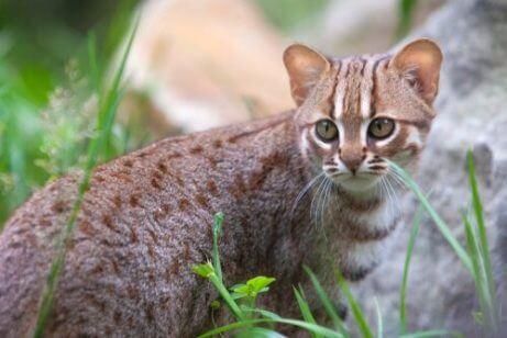 아시아 고양이 품종 5가지