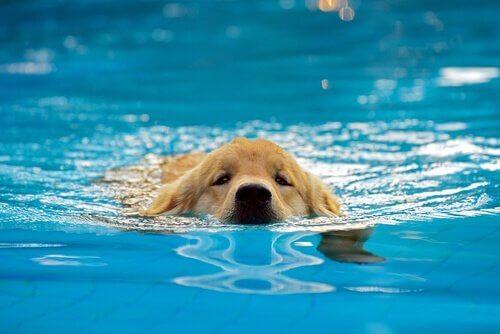 강아지를 수영장에 데려가는 것은 좋은 생각일까?