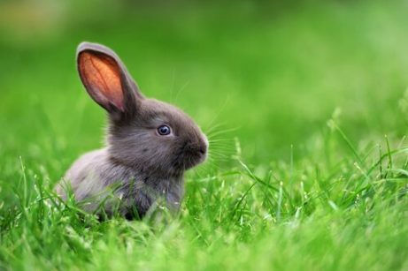드워프 토끼의 특징 및 돌보는 법