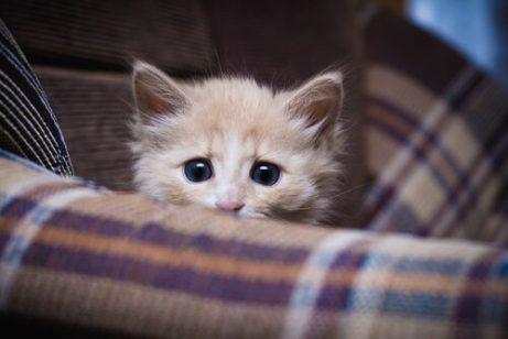 새끼 고양이를 돌보기 위해 알아야 할 사항