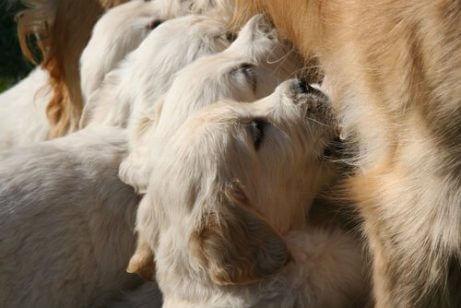 젖을 뗀 강아지를 올바르게 먹이는 방법