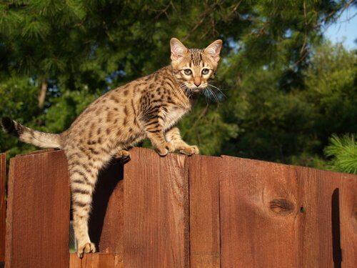 독특하고 이국적인 고양이 5종