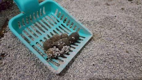 고양이가 모래 화장실을 사용하도록 훈련하는 방법