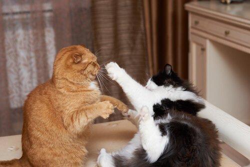 고양이 싸움에 대해 알아야 할 것
