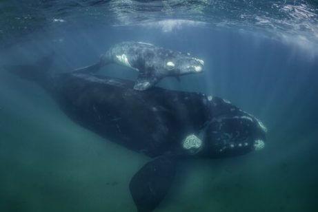 바다 속 멸종된 두 고래