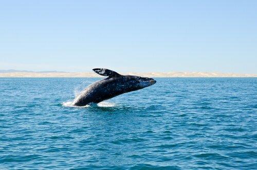 멸종된 고래들이 스페인 연안에서 발견되다