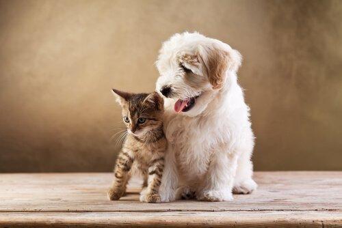 고양이와 개의 차이점