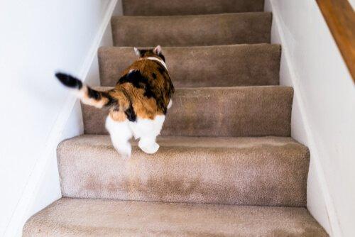 고양이는 왜 미친 듯이 집 안을 뛰어다닐까?