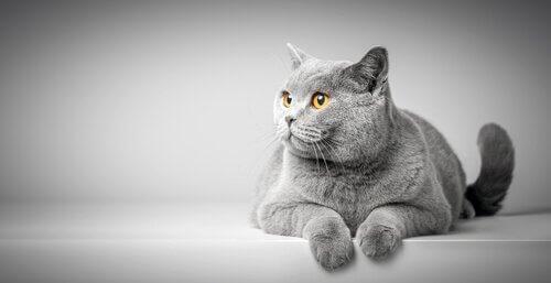 고양이의 몸짓 언어