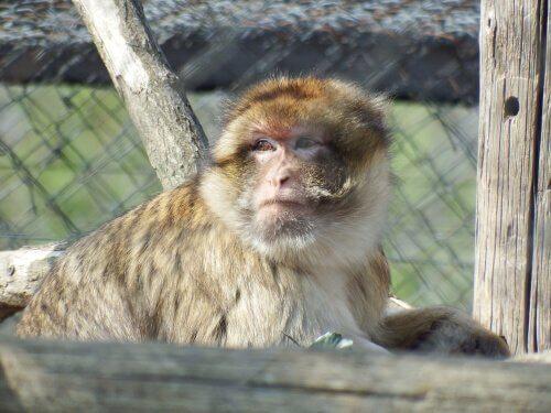 불법 밀매의 피해자 원숭이