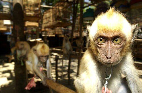 스페인, 유럽의 불법 동물 밀매의 관문