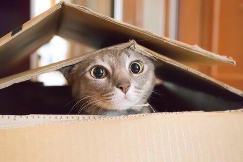 고양이 중성화 수술의 중요성