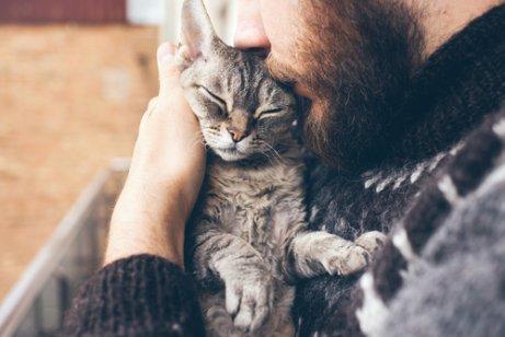고양이와 친구가 되는 과학적인 방법