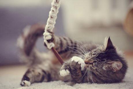 놀이하는 고양이
