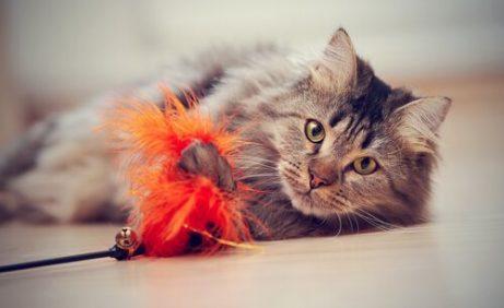 고양이를 얼마나 오랫동안 집에 혼자 둘 수 있을까?