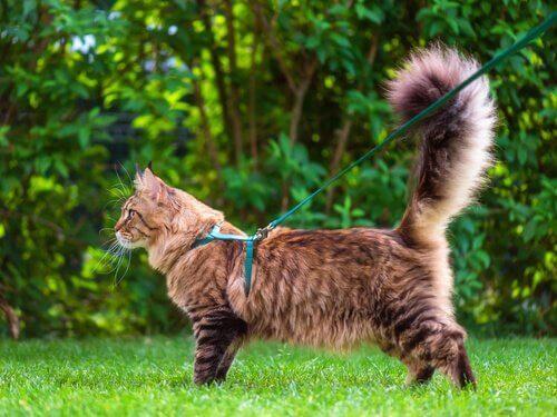 고양이의 꼬리 언어로 표현할 수 있는 것