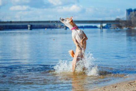 강에서 수영하는 개
