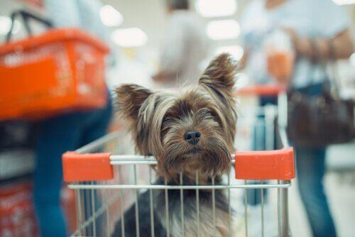 반려동물과 함께 쇼핑을 갈 수 있을까?