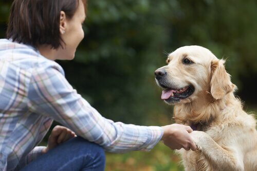 인생의 교훈: 반려동물이 가르쳐 주는 것들