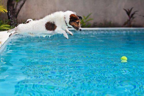 수영장에서 반려동물과 놀아주기