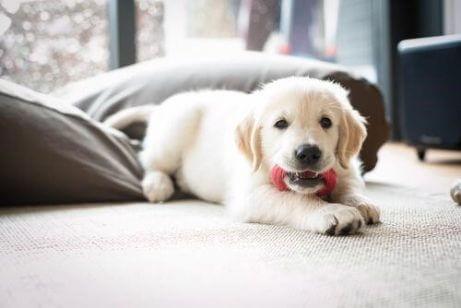 강아지들이 하는 방법을 잘 모르는 5가지