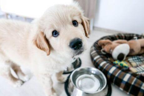 강아지 때부터 주인을 존중하게 만드는 방법