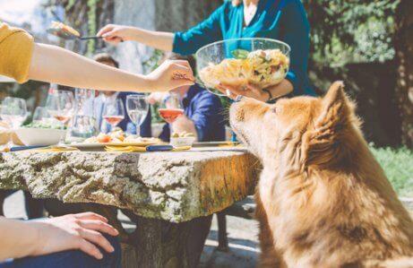 반려견을 위한 샐러드 레시피: 집에서 만드는 건강식