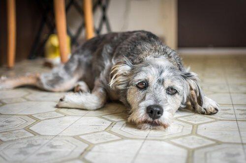 모든 것을 다 씹는 개를 막을 수 있을까?