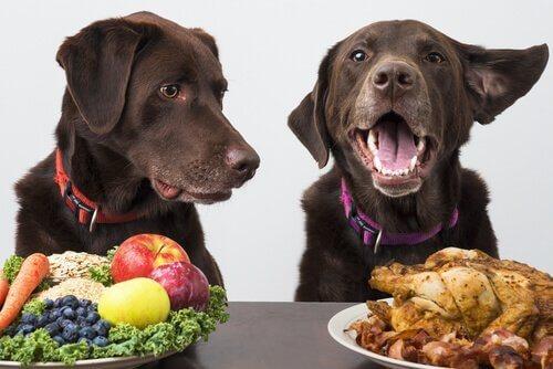 개가 엄격한 채식주의 식단을 따라도 될까?