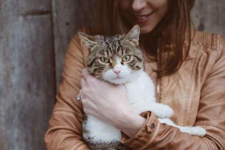 임신과 고양이에 관한 근거 없는 믿음