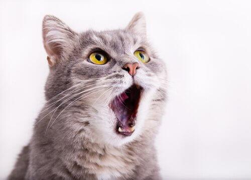 고양이의 음성 소실