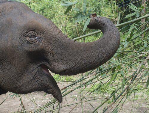 코끼리에 관한 흥미로운 사실