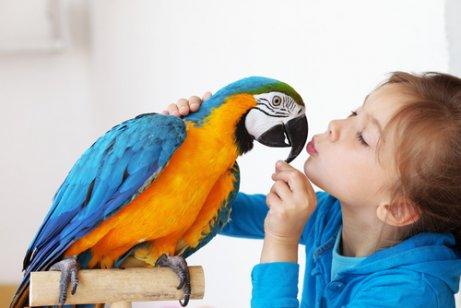 반려동물로 키우기 가장 좋은 새