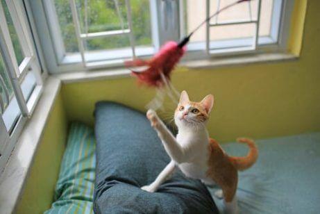 놀이 중인 고양이