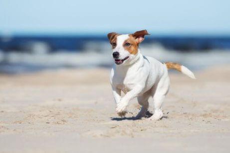 해변을 달리는 개