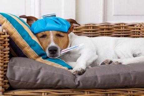 반려동물의 체온을 낮추는 방법