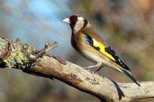 노래를 부르는 아름다운 새 5종