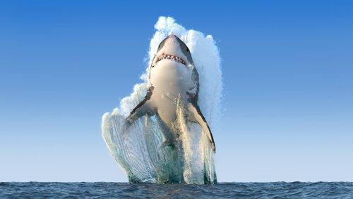 상어는 언제 공격할까?