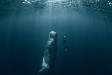 향유 고래와 다이버
