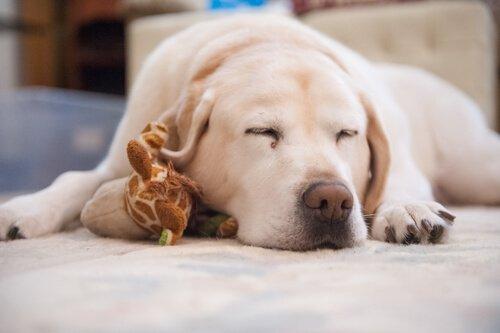 반려동물의 수면 문제에 어떻게 대처할까?