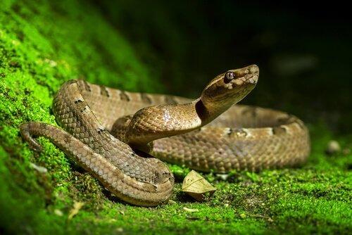 정원에 뱀이 있으면 어떻게 해야 할까?
