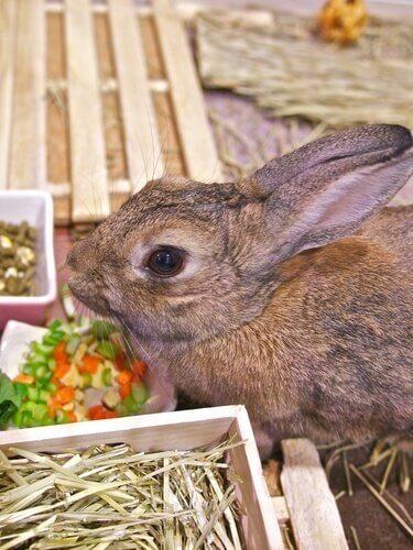 애완 토끼를 배변