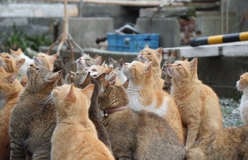 일본에 있는 고양이 섬