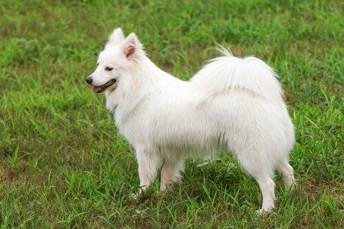 개 꼬리의 유형